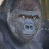 名古屋の実家の帰省。東山動物園は休園日でイケメンゴリラに会えず。