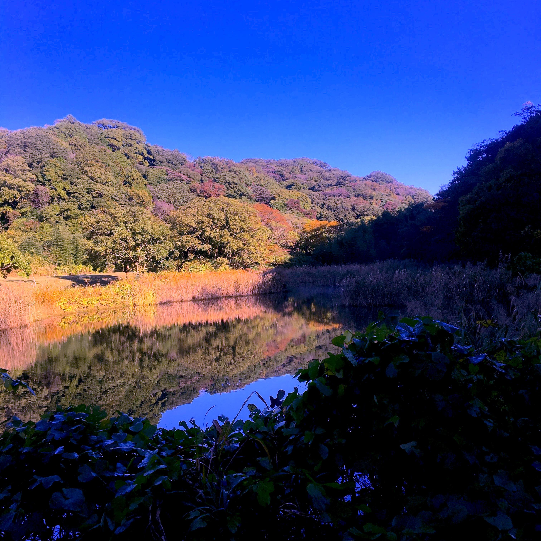 池子の森が色づいてきました