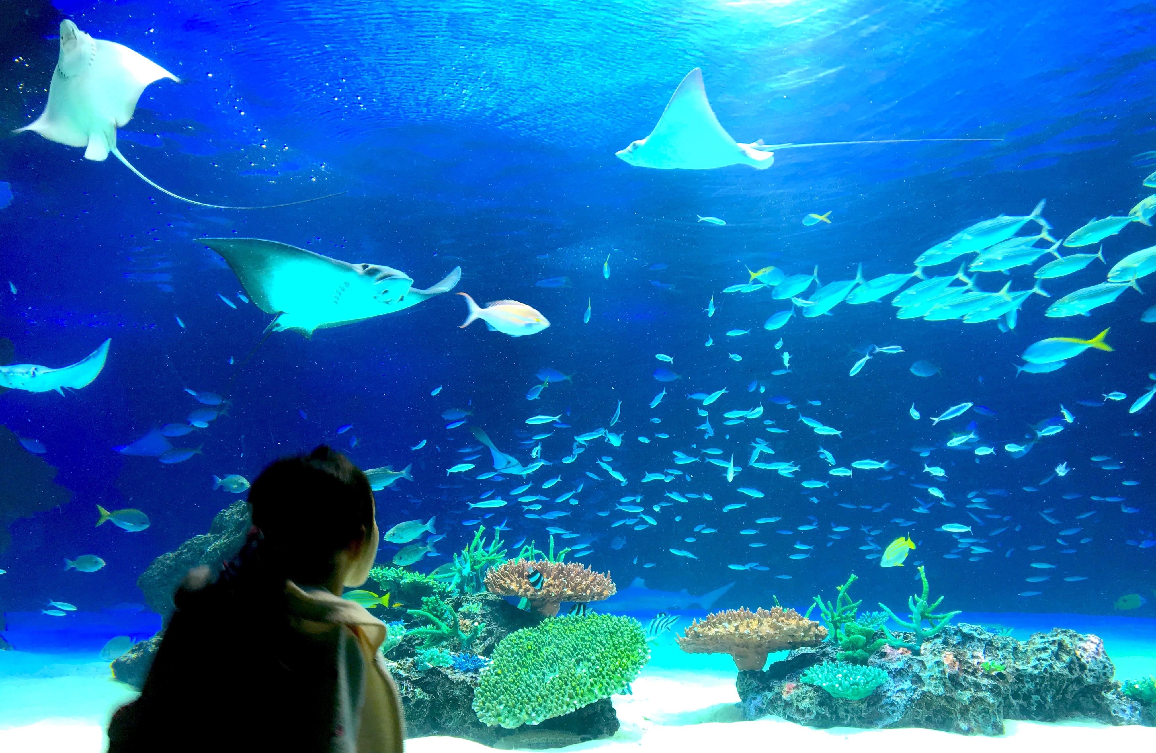 サンシャイン水族館に行きました