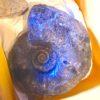 化石ワークショップで小学生の生物知識の凄さに驚いた
