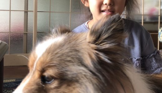 三が日に名古屋の実家へ。犬の散歩が目的です。